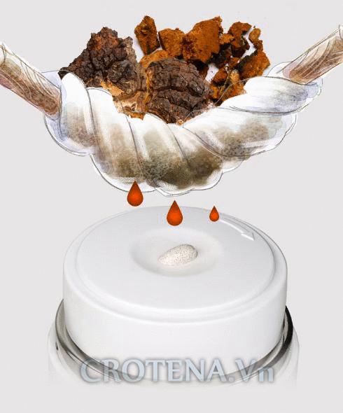 Nước ép nấm Chaga - thành phần đặc biệt chỉ có trong các sản phẩm của Crotena