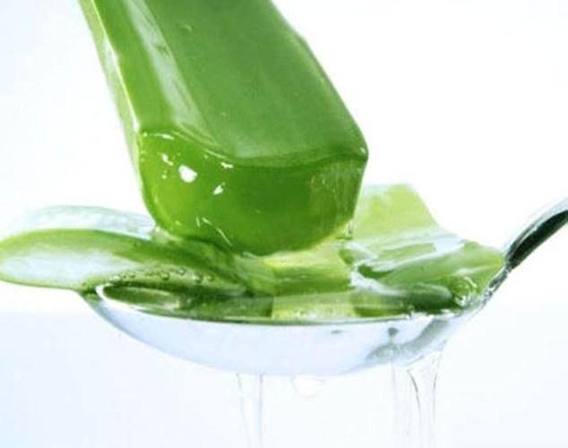 Chiết xuất lô hội rất được sử dụng trong các loại kem dưỡng trắng da