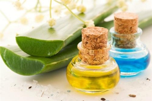 Học cách tự chế kem dưỡng ẩm từ dầu dừa và nha đam cực dễ tại nhà