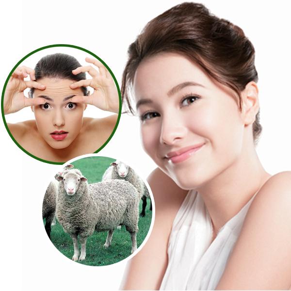 Kem chống lão hóa Sakura có thành phần chính là nhau thai cừu
