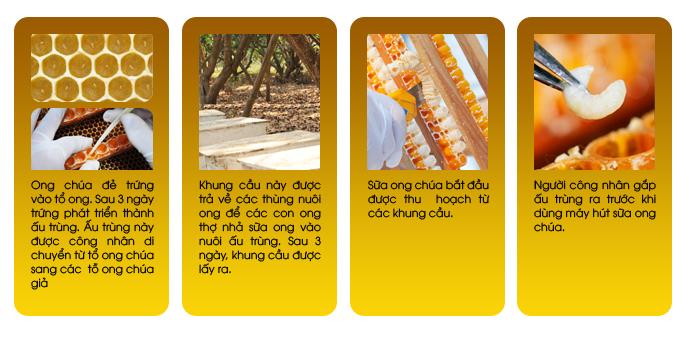 Sữa ong chúa Sakura Royal Jelly Premium là sản xuất từ 100% sữa ong nguyên chất