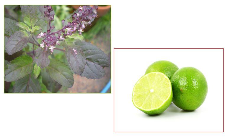 Lá hương nhu và nước cốt chanh có tác dụng loại bỏ mụn, tăng cường dưỡng da