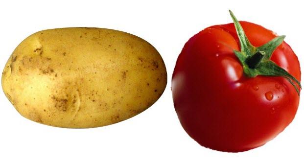 Mặt nạ trị nám bằng cà chua và khoai tây tiết kiệm