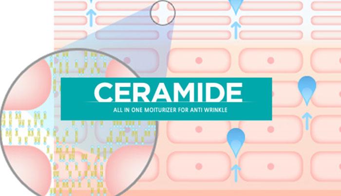 Tìm hiểu vai trò Ceramide trong dưỡng da